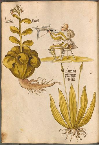 Arzneipflanzenbuch, 1525 h