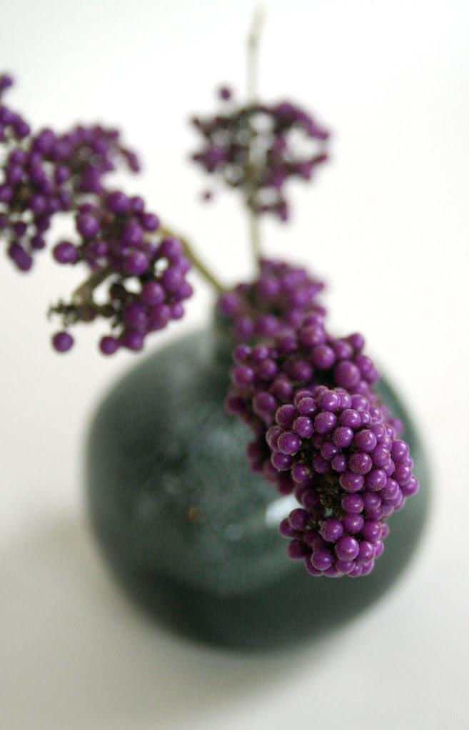 Callicarpa bodinieri var: giraldii 'Profusion' Beautyberry
