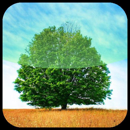 árvore proibida