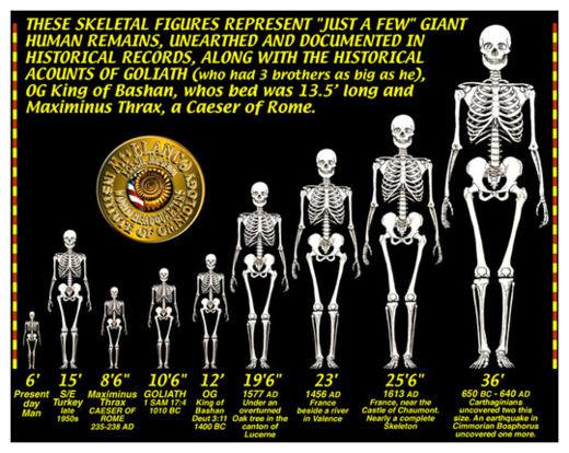 Giant Skeletons_5