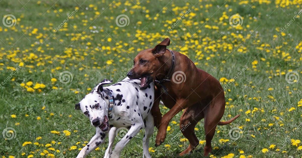 Hunde Spiele Kostenlos