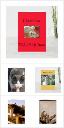 Animal & Bird Greeting Cards