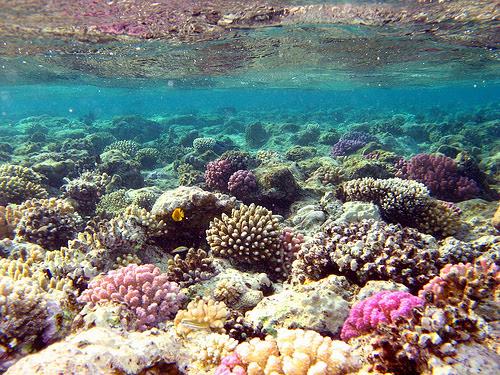 http://ramalaut08.files.wordpress.com/2010/04/terumbu-karang-34.jpg