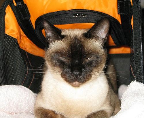 Sputnik in her new pet porter