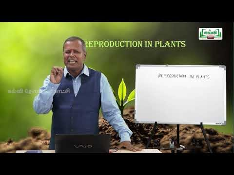 NEET  Bio Botany Reproduction In plants  Kalvi TV