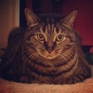 Big / my cat Sammy / 11.29.12