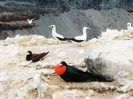 """perierga.gr - To """"νησί των πουλιών""""!"""