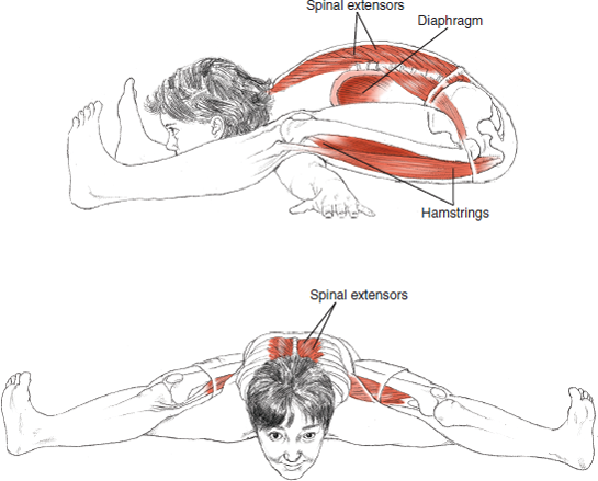 Kurmasana Turtle Pose © Leslie Kaminoff's Yoga Anatomy  B E N E F I T S — Strengthens the back — Tones the abdominal organs — Encourages flexibility in the hips — Quiets the mind  ❤ Yoga Inspiration Buy it here http://amzn.to/1ctMdtp http://ift.tt/18hDKoD
