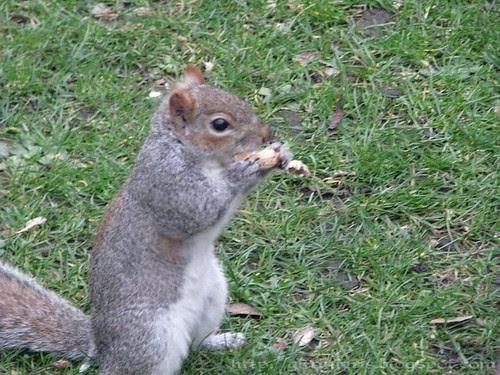 Squirrel has lunch