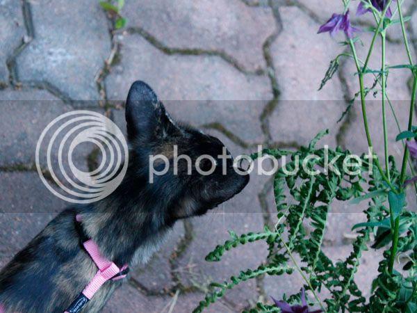 photo Kissojenjuhannus3_zps39dda8d3.jpg