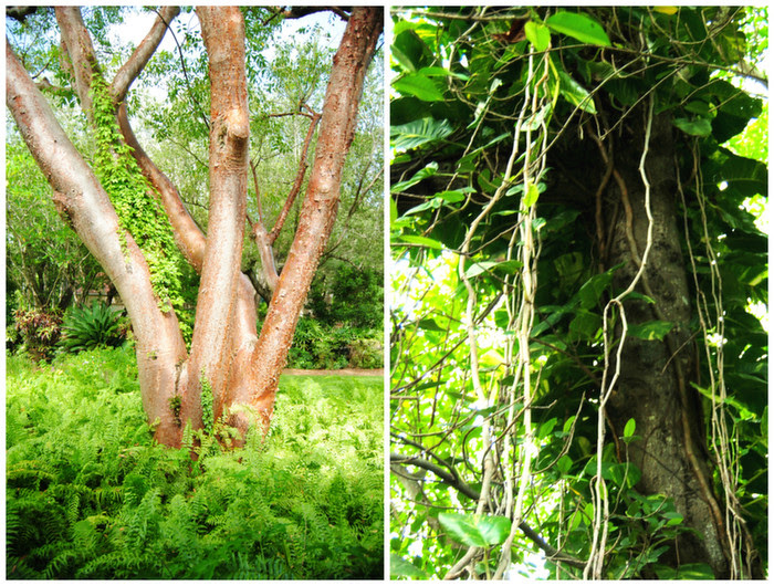 tropical_tree_and_vines