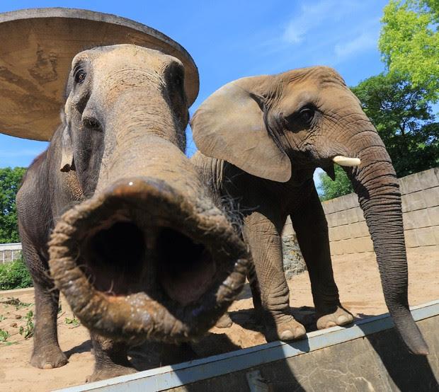 Elefante parece dar 'beijinho' com a tromba em fotógrafo ao ser clicado em zoológico de Magdeburg, na Alemanha (Foto: Jens Wolf, DPA /AFP)