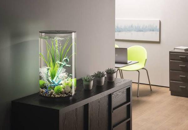 35 Modern Mini Aquarium Designs For Your Small Spaces Homemydesign