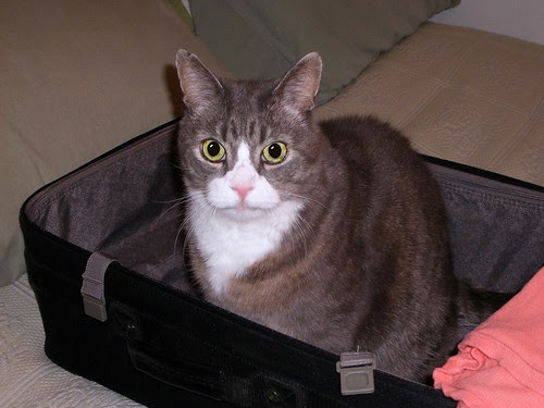 LB in My Suitcase