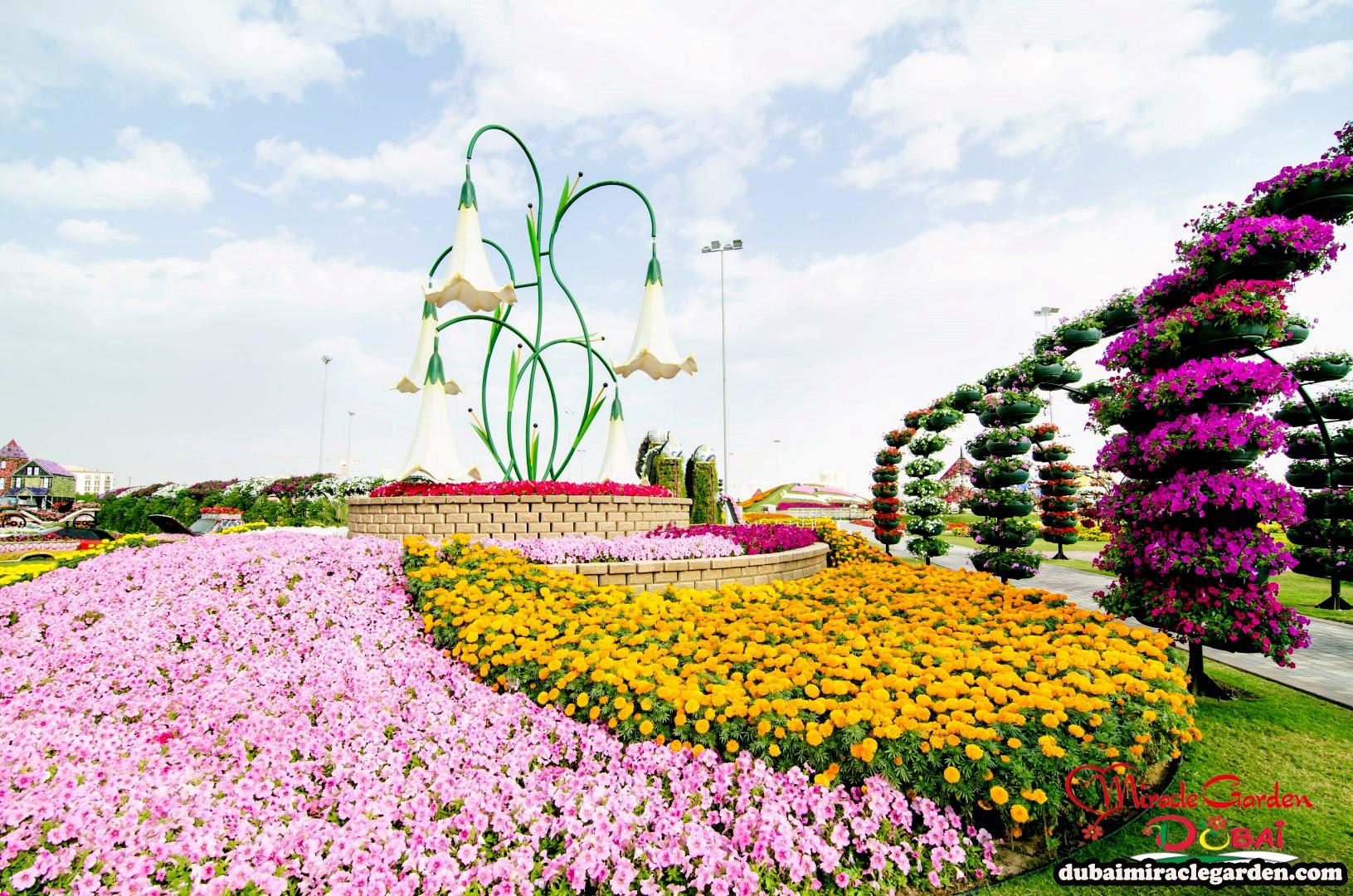 Dubai Miracle Garden 24