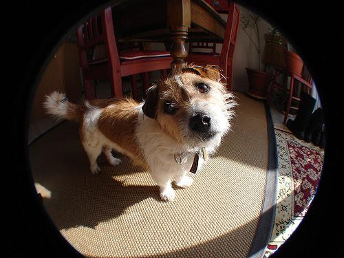 wide-angle dog