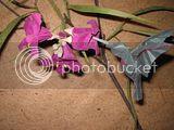 PCOC origami hummingbird Anne Taylor