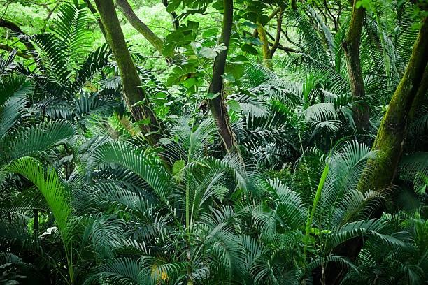 regenwald bilder zum ausdrucken  malvorlagen gratis