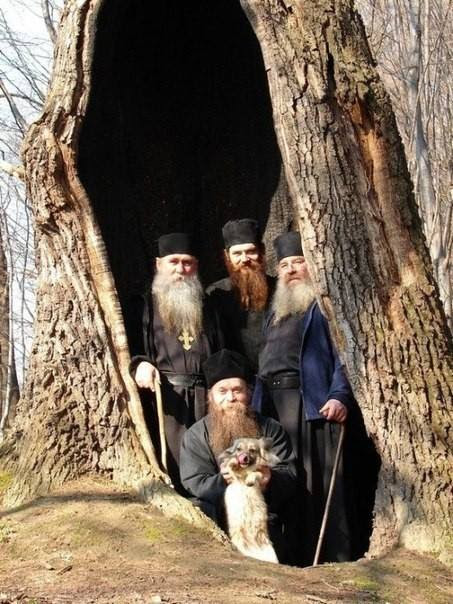 """""""Do you know that God gave us one more commandment, which is not recorded in Scripture? It is the commandment """"love the trees."""" When you plant a tree, you plant hope, you plant peace, you plant love, and you will receive God's blessing."""" - Elder Amphilochius of Patmos"""