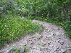 Infested trail