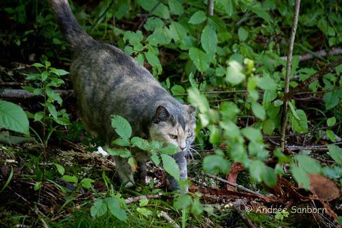 Possum Takes a Hike-11.jpg