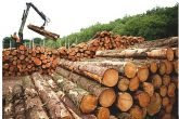 Nigerian govt, exporters to stop export of processed wood by 2020