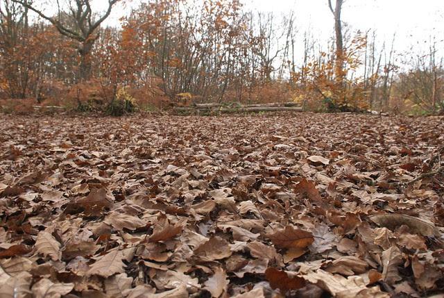 DSC_5142 Autumn leaves
