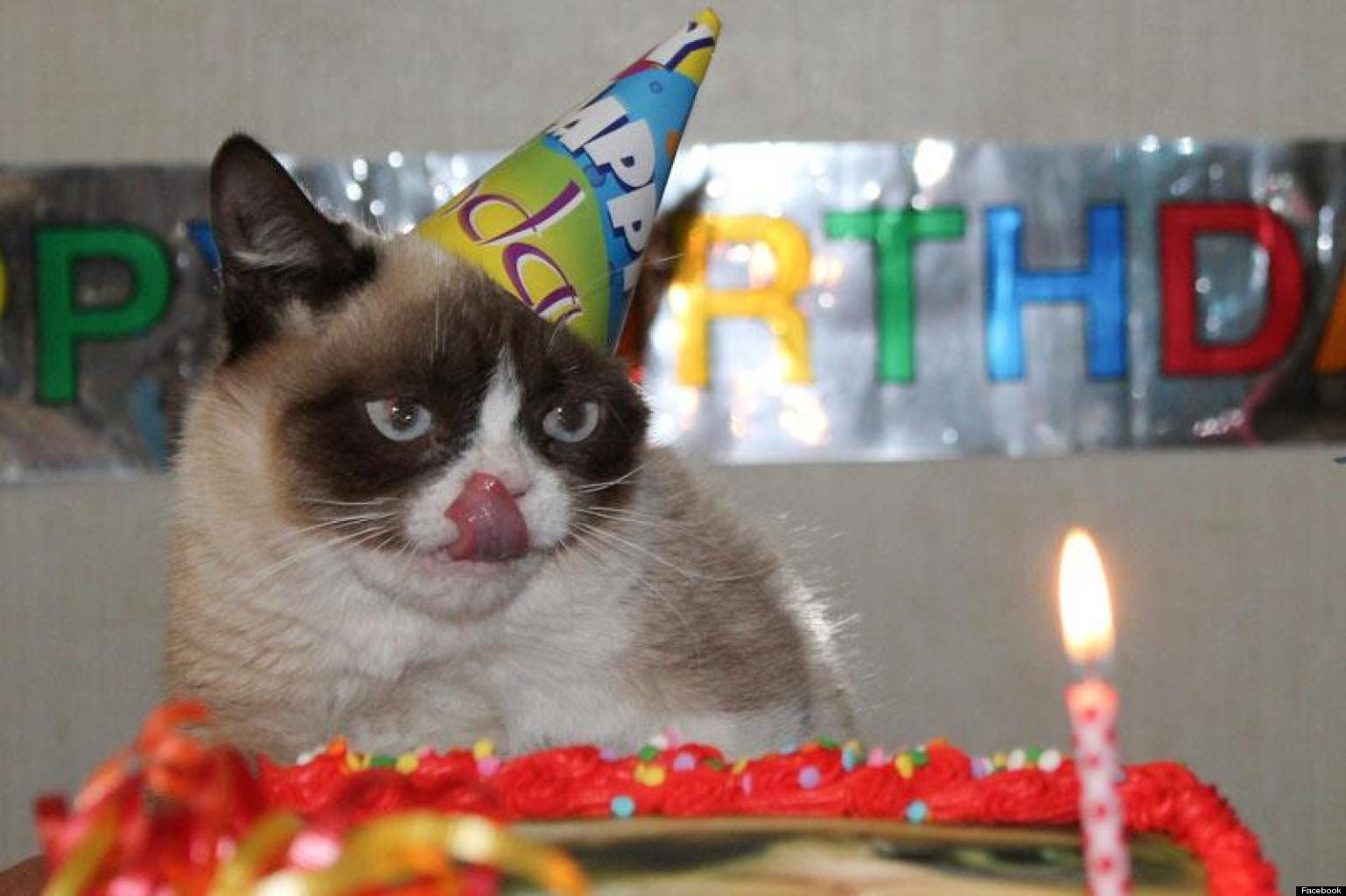 Grumpy Cat Celebrates Her First Birthday PHOTOS Huffington Post