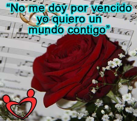 Rosas Hermosas Con Palabras De Amor Rosas De Amor