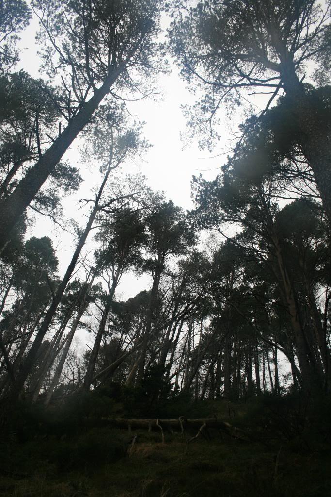 Mørkeskogen... høye trær og bratt terreng overalt