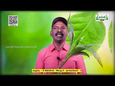 3rd Science தாவரங்கள் பருவம் 3 பகுதி 2 TM Kalvi TV