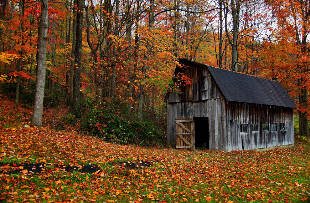 Fall foliage and country-barn, Autumn in West Virginia