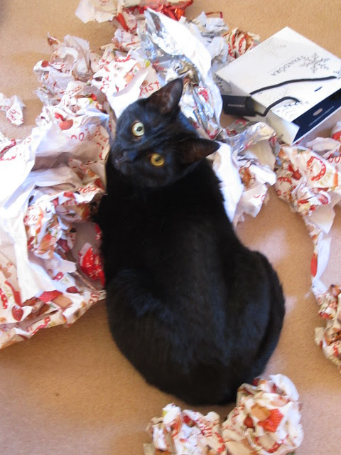 Flo enjoys the wrapping paper! (3)