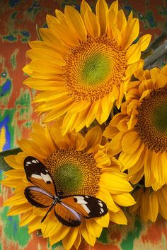 Orange Black Butterfly And Sunflowers Photograph  - Orange Black Butterfly And Sunflowers Fine Art Print......... Do you believe in signs?....... The other day I was sitting first in line at a crowded intersection and a huge butterfly flies right in front of my windshield, scared me a little, so unexpected...... the first thing I thought of was Bailey Joy. I believe in signs~