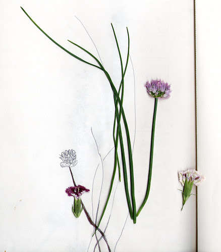 Chives and Flowers