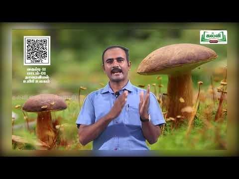 11th Botany பூஞ்சைகள் பாடம் 1 அலகு 1 பகுதி 6 Kalvi TV