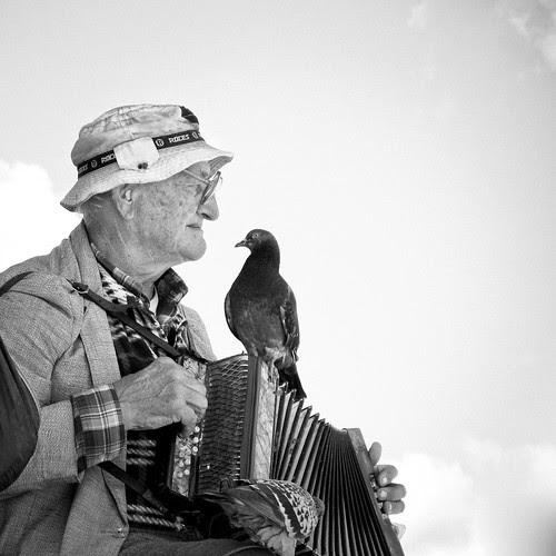 Pigeon Song por -- david