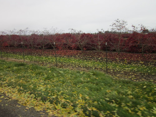 Fall color, Howell Prairie Road