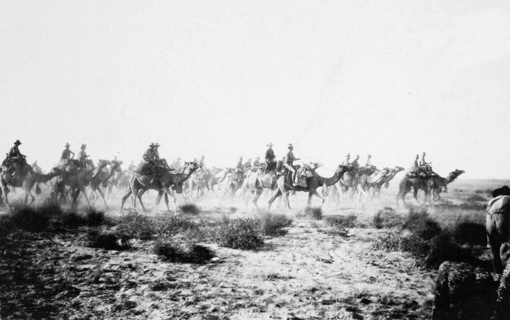 Os animais também lutaram na Primeira Guerra Mundial 23