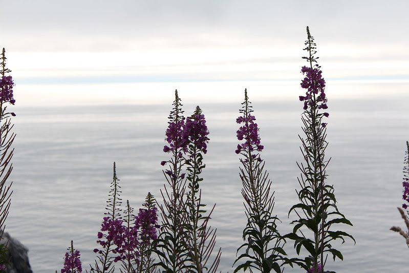 coastal drive (redwoods) by replicate then deviate