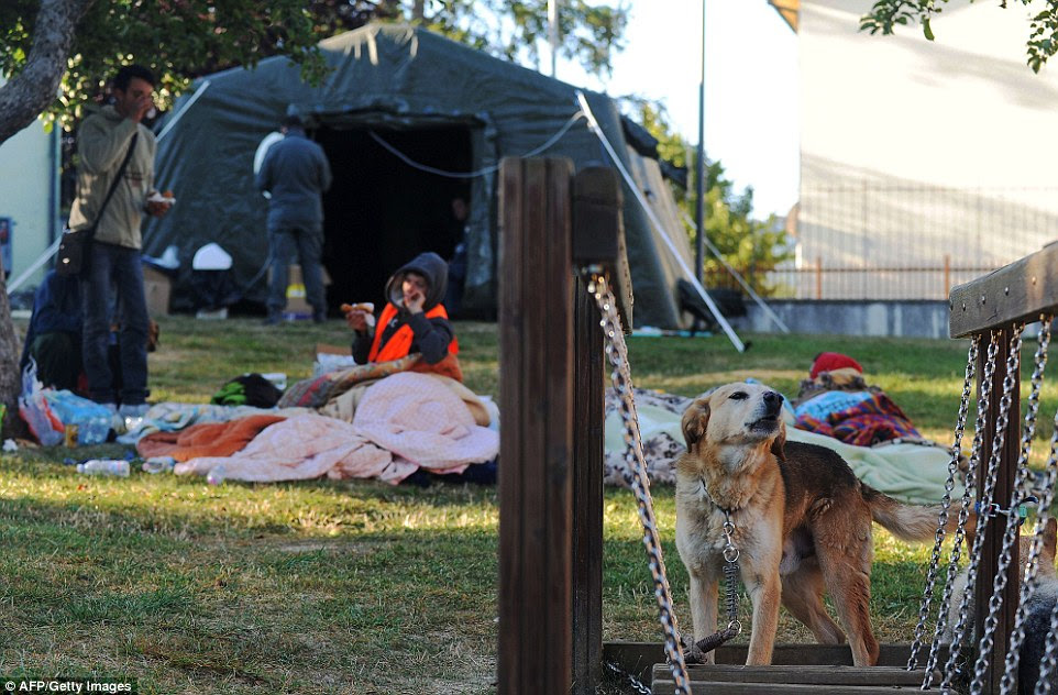A dog that survived the earthquake stands on a bridge in the park where local residents camped out overnight