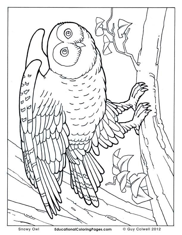 Realistic Animal Coloring Pages  Coloring Pages