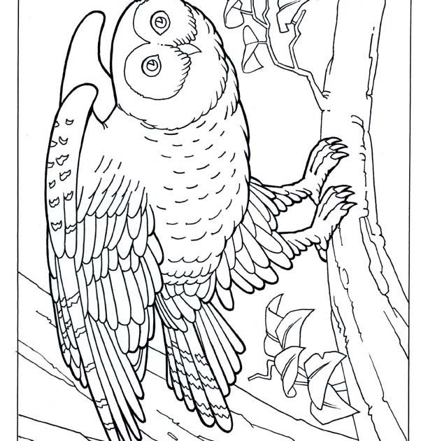 Safari Animals Coloring Pages: Realistic Jungle Animals Coloring Pages