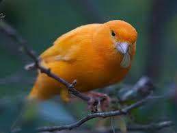 Puisi Tentang  Burung