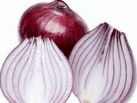 image54 Reproduksi Vegetatif pada Tumbuhan
