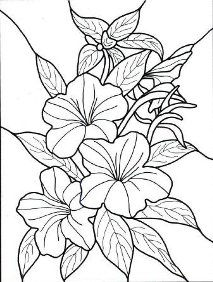 Free Tropical Flower Coloring Pages Download Free Clip Art Free Clip Art On Clipart Library