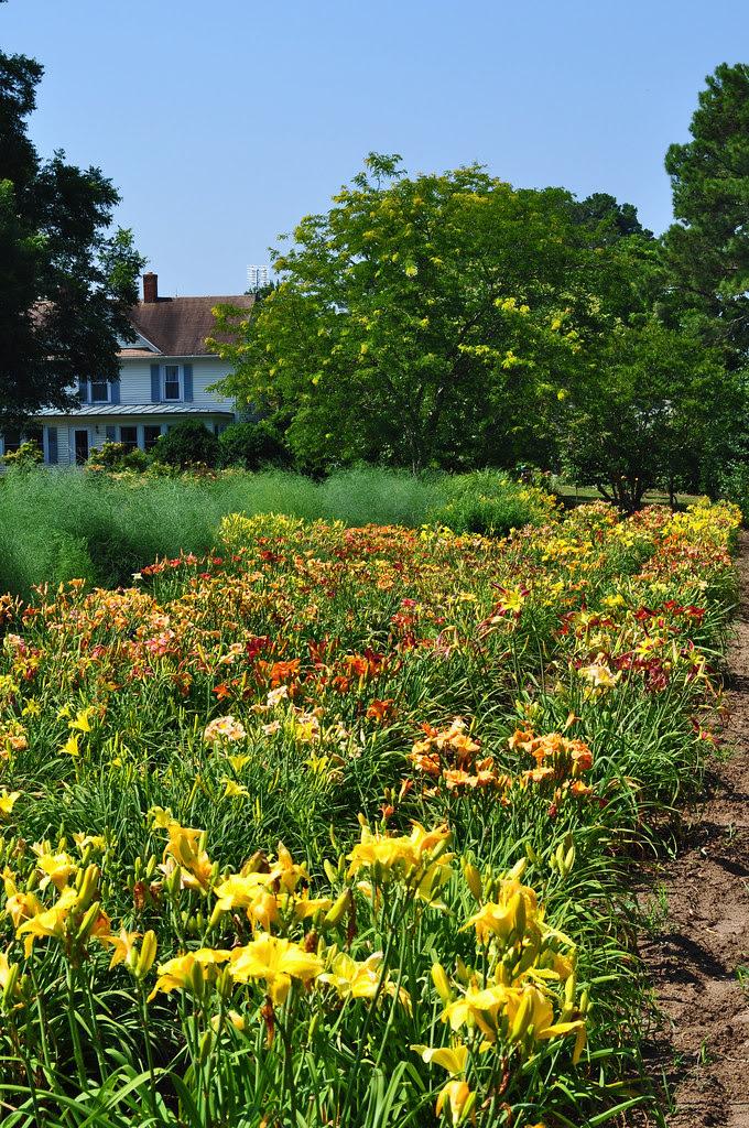 Sterrett Gardens (4)