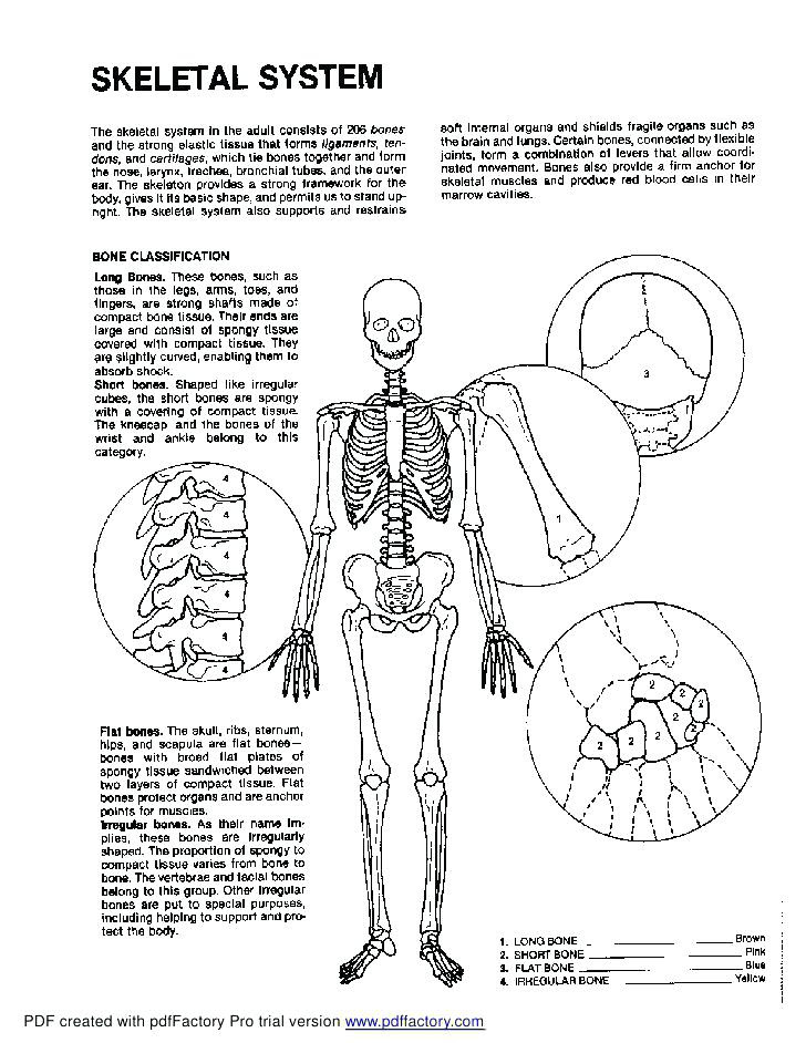 31 Anatomy And Physiology Coloring Book - Free Printable Coloring Pages