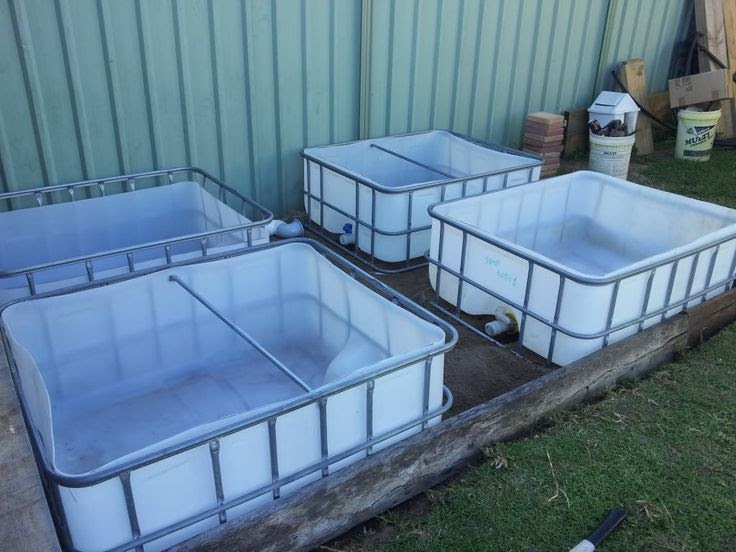 Today aqua aquaponic supplies for sale for Aquaponics fish for sale