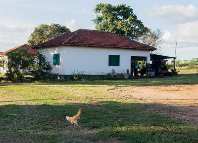 fazenda_sustentavel_campea_casas  (Foto: Marcelo Min )